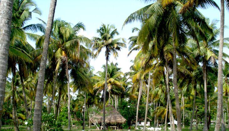 Die Anlage des Marari Beach Resort