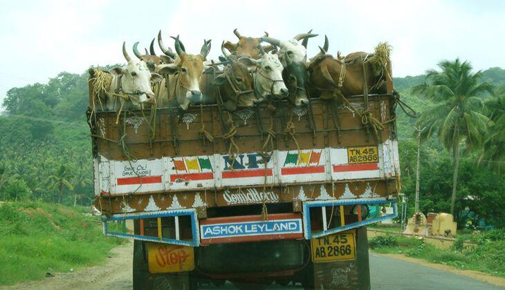 Die Antwort auf die Frage, warum man in Indien für 140 km schon mal 3 Stunden braucht