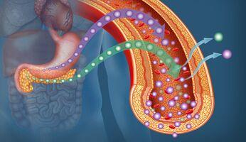 Glukose und Insulin beeinflussen sich gegenseitig