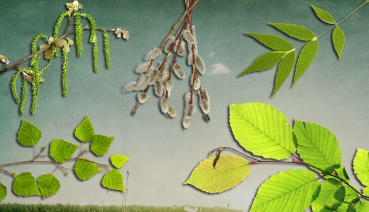 Heuschnupfen-Kalender: Pollenflug im April