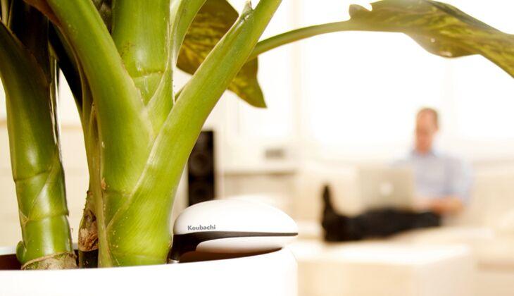 """Koubachi """"Wi-Fi Plant Sensor"""""""