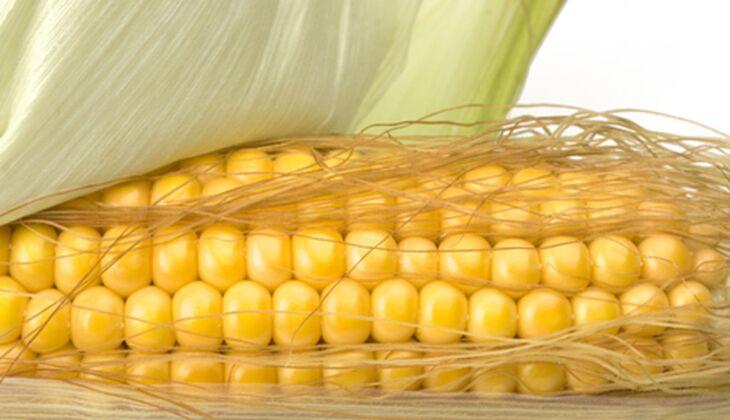 Lecker: frische Maiskolben vom Grill