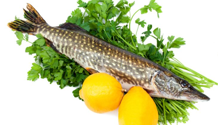 Nicht jeder Fisch ist kalorienarm