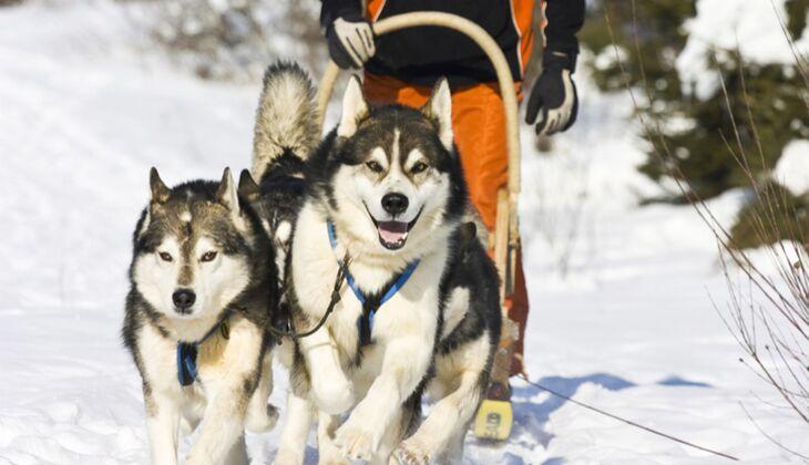 Wochenendtipp: Eine Tour mit dem Husky-Schlitten